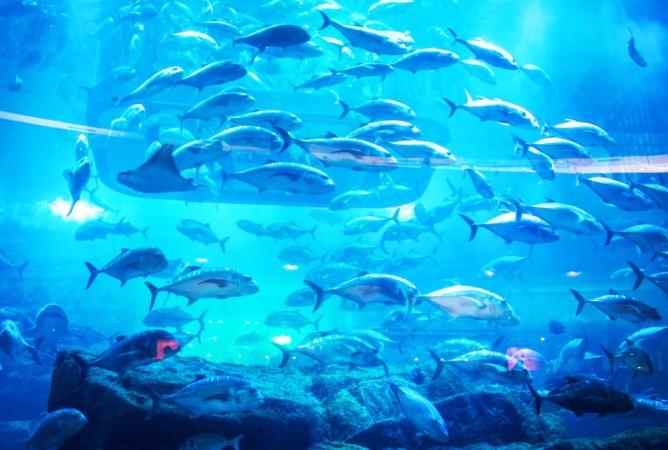 Dubai Aquarium and Underwater Zoo - Dubai Mall