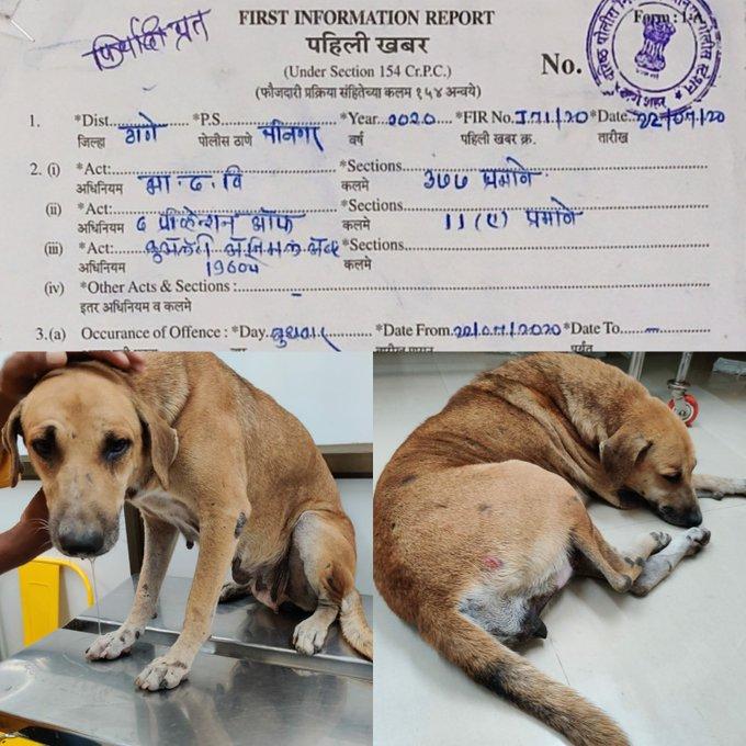 Dog Rape in India